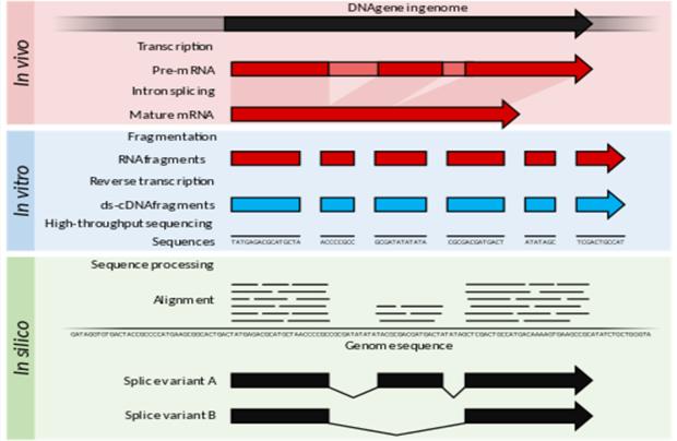 RNA Seq workflow