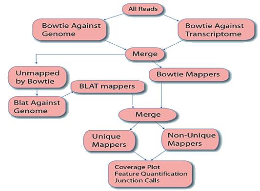 Gene Expression in Eukaryotes | RNA Seq Pipeline | Illumina RNA-Seq |