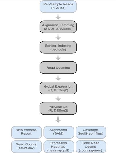 RNA Express Workflow